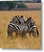 Zebra Protect Each Other Metal Print