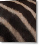 Zebra Stripes Metal Print