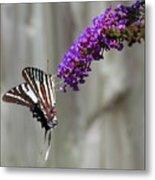 Zebra Swallowtail Butterfly 2 Metal Print
