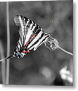 Zebra Swallowtail Butterfly 2016 Metal Print