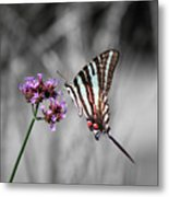Zebra Swallowtail Butterfly And Stripes Metal Print