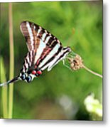 Zebra Swallowtail Butterfly In Garden 2016 Metal Print