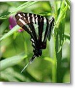 Zebra Swallowtail Butterfly In Green Metal Print