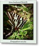 Zebra Swallowtail Butterfly Metal Print