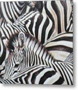 Zebra Triptyche Middle Metal Print