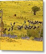 Zebra, Wildebeest And Giraffe Metal Print