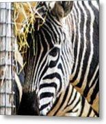 Zebra Zee Metal Print