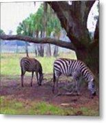 Zebras Under Oaks Metal Print
