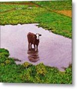 Zen Cow Metal Print