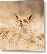 Zen Fox Series - Zen Fox 2.7 Metal Print