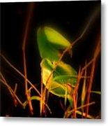 Zen Photography - Sunset Rays Metal Print