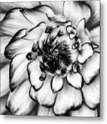 Zinnia Close Up In Black And White Metal Print