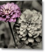 Zinnia Flower Pair Metal Print
