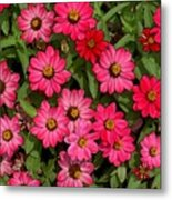 Zinnia Riot Watercolor Metal Print