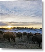 Zion Mountain Ranch Buffalo Herd Metal Print
