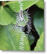 Zipper Spider Metal Print