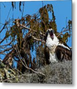 Zombie Osprey Crying For Brains Metal Print