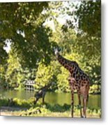 Zoo Landscape Metal Print