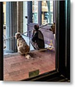 018 - Girl And Dog Metal Print