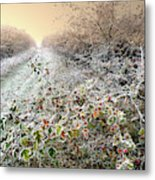 Autumn Frosts Metal Print