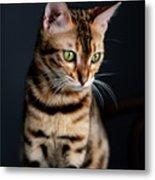 Bengal Cat Portrait Metal Print