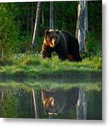 Big Brown Bear Walking Around Lake In Metal Print
