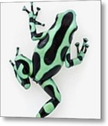 Black And Green Poison Dart Frog Metal Print