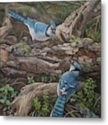 Blue Jay Stand Off Metal Print