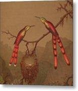 Brazilian Hummingbirds Metal Print