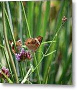 Buckeye Butterflies Metal Print