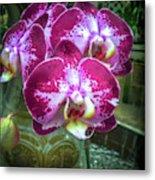 Cascade Of Orchids Metal Print