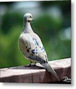 Dove On The Deck Metal Print