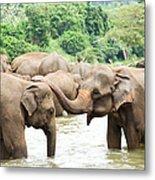 Elephants In River Metal Print