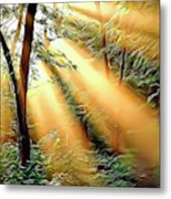 1 Forest Rays Metal Print