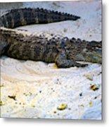 Gator in Sand Metal Print