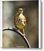 Georgia State Bird - Brown Thrasher Metal Print
