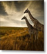 Giraffes And The Landscape Metal Print
