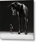 Great Dane And Chihuahua Staring At One Metal Print