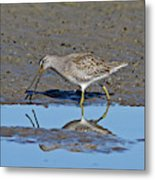 Long-billed Dowitcher Metal Print