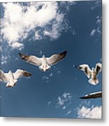 Myanmar, Inle Lake, Seagulls Inflight Metal Print