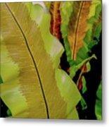 Plants And Leaves Hawaii Metal Print