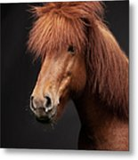 Portrait Of Horse Metal Print