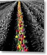 Rows Of Tulips Metal Print