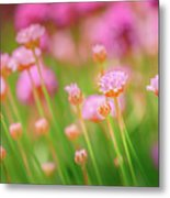 Sea Thrift  Metal Print