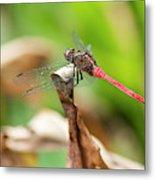 Small Beautiful Dragonfly Metal Print