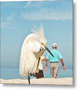 Snowy Egret Standing On Sandy Beach On Metal Print