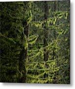 Stunning Fine Art Landscape Image Of Winter Forest Landscape In  Metal Print