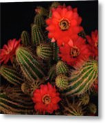 The Beauty Of Red  Metal Print
