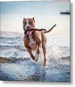 The Dog In The Water, Swim, Splash Metal Print