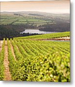 Vineyard At Sunset Metal Print